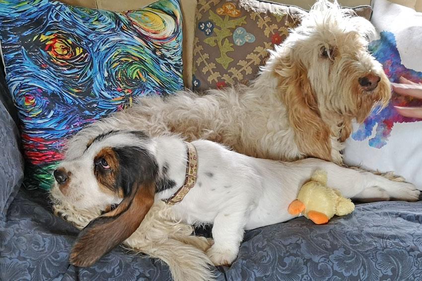 My GBGV Life me and my dog mom