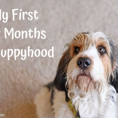 My GBGV Life Looking Back On My First Six Months Of Puppyhood