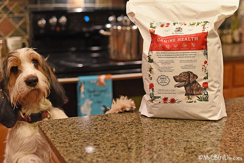 My GBGV Life One Year Of Dr Harveys Canine Health