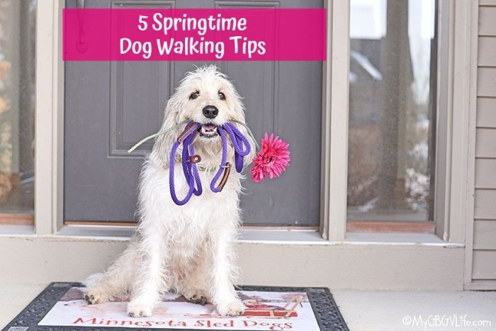 5 Springtime Dog Walking Tips