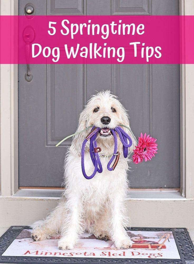 My GBGV Life 5 Springtime Dog Walking Tips