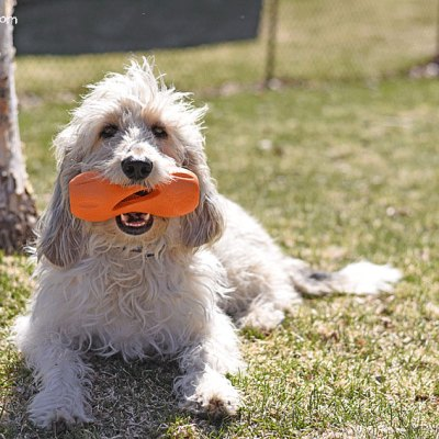 Stop Canine Boredom With Qwizl From WestPaw