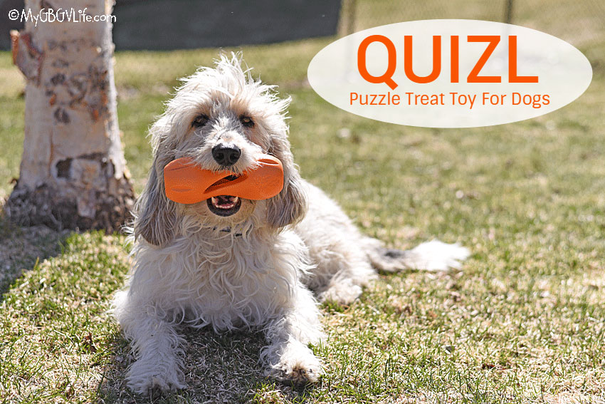 My GBGV Life Stop Canine Boredom With Quizl From WestPaw - Giveaway