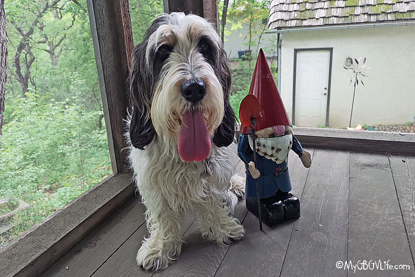 My GBGV Life Madison with the gnome