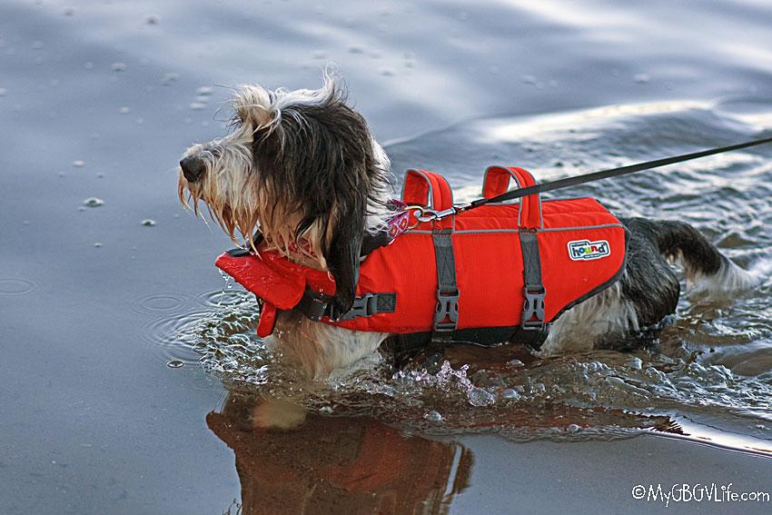 My GBGV Life life jacket