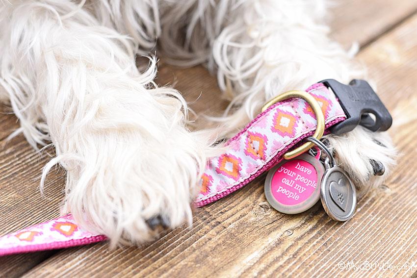 My GBGV Life dog ID tags
