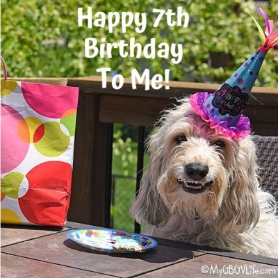 Doggy Birthday Parties Can Be So Much Fun!