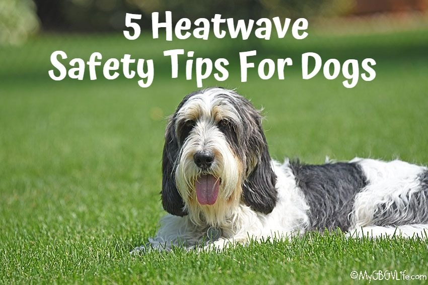 My GBGV LIfe 5 Heatwave Safety Tips For Dogs