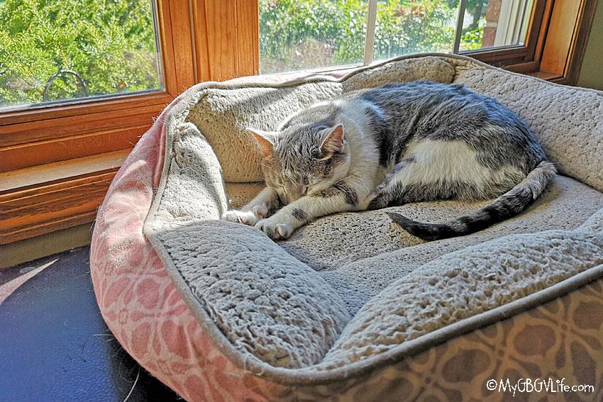 My GBGV Life cat sleeping