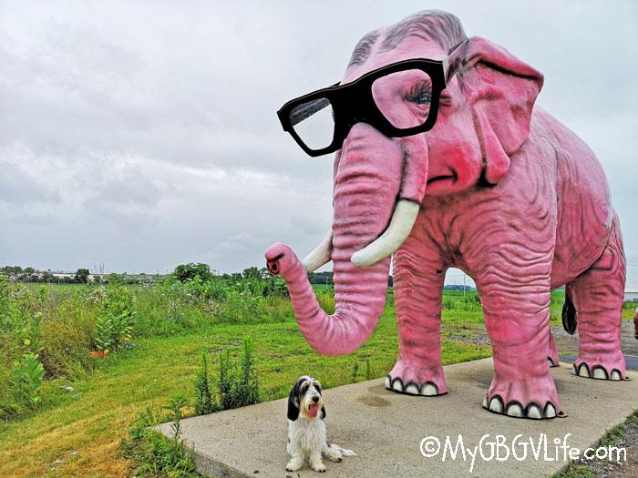 My GBGV Life Madison pink elephant