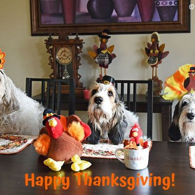 Happy Turkey Day To All From The Turkey Hounds
