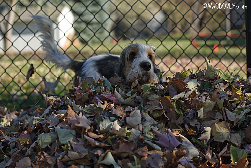 My GBGV Life Olivia in the leaves