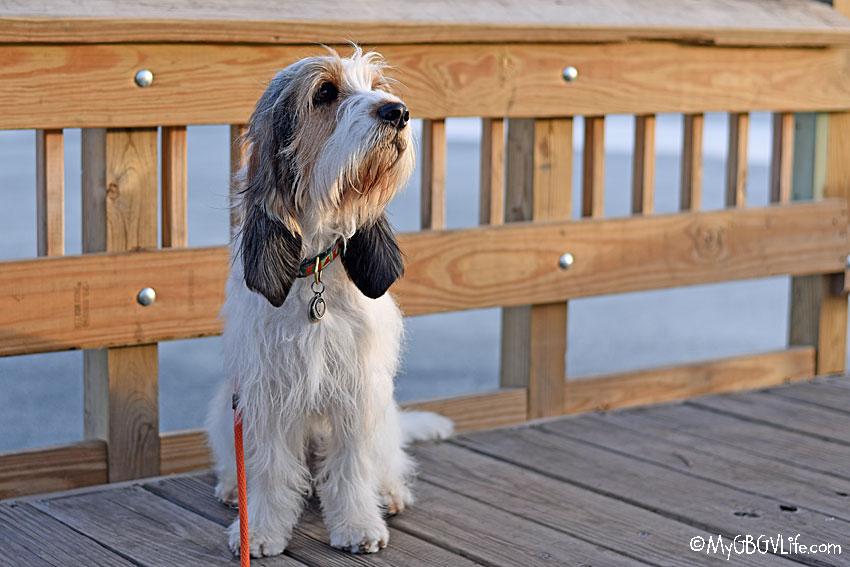 My GBGV Life Olivia on the dock
