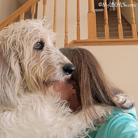 My GBGV Life Bailie huggle hound