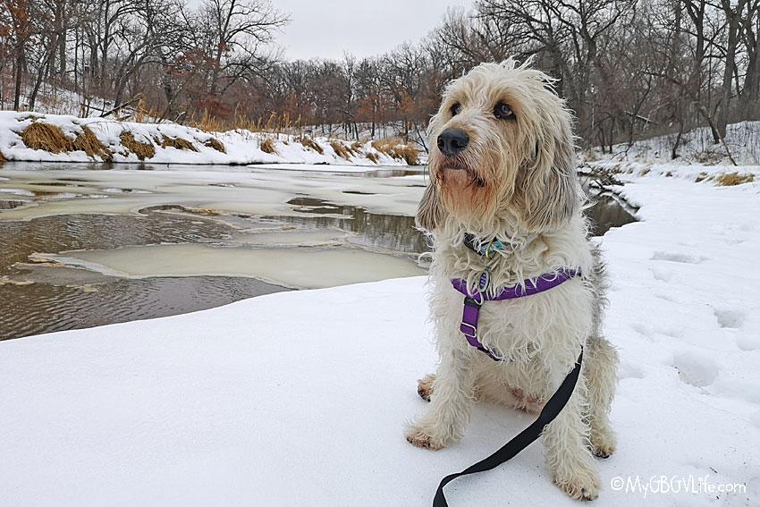 My GBGV Life on creek bank
