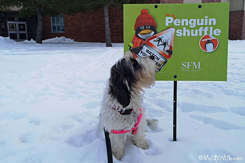 My GBGV Life The Penguin Shuffle- Are You Doing It?