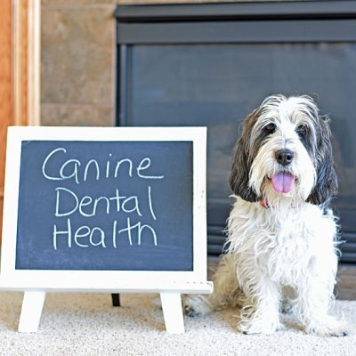 Canine Dental Health Is So Important!