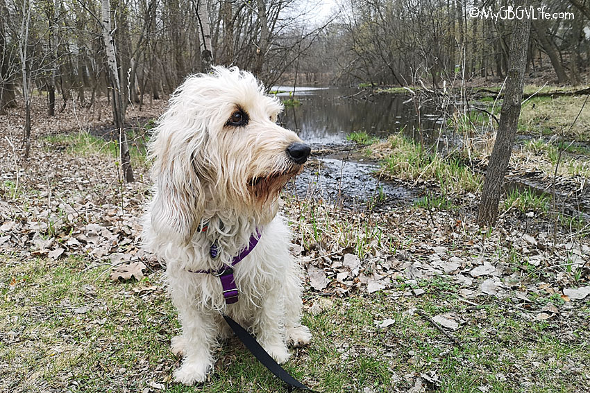 My GBGV Life Checking Out The Minnetonka Trail System Woods
