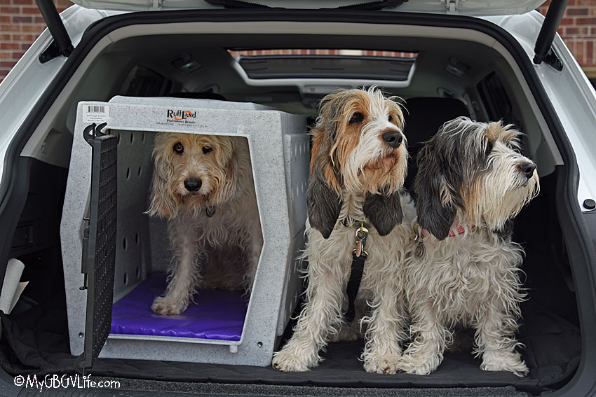 My GBGV Life For Potential Family Road Trips, A New Car And Kennel