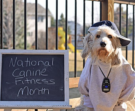 April Is National Canine Fitness Month