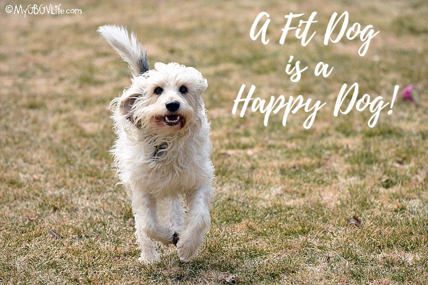 My GBGV Life April Is National Canine Fitness Month
