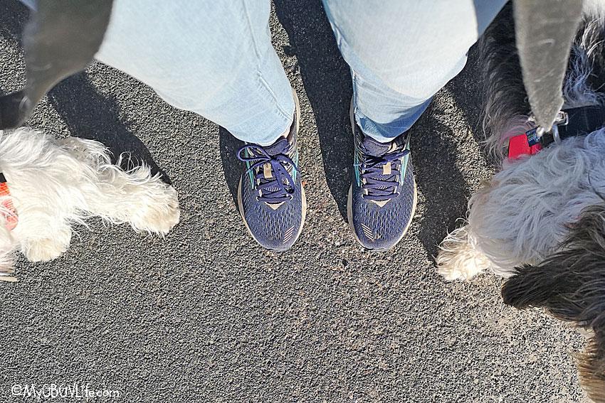 My GBGV Life walking dogs