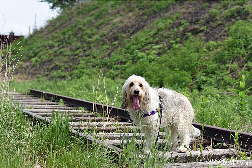 My GBGV Life on the tracks