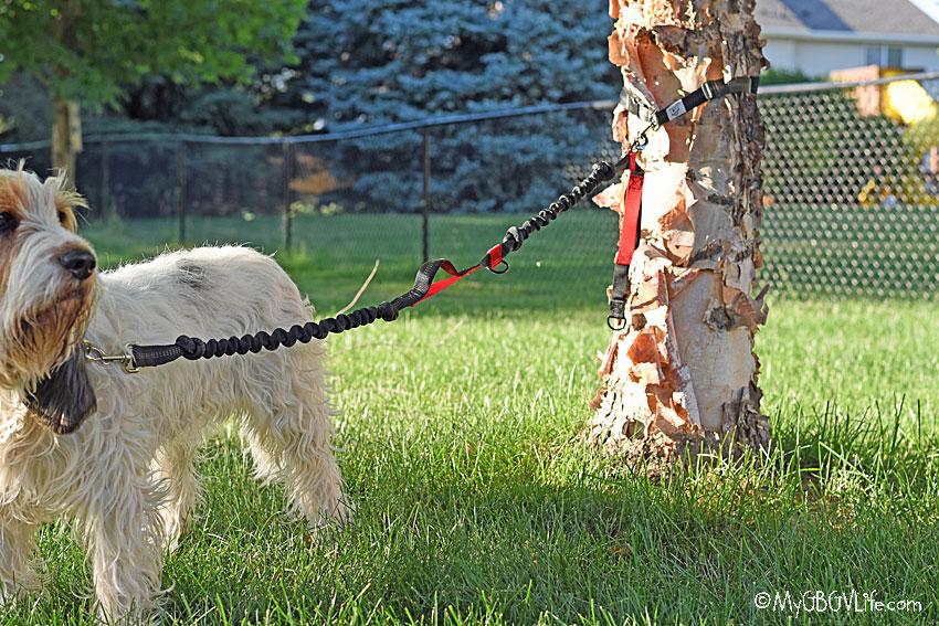 My GBGV Life the leash