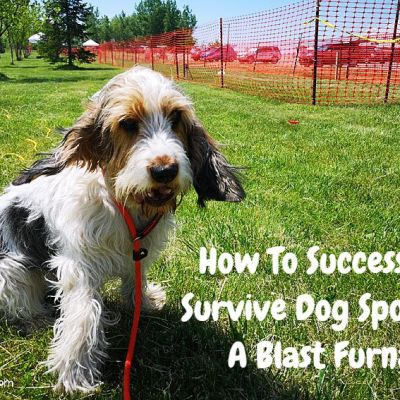 How To Successfully Survive Dog Sports In A Blast Furnace