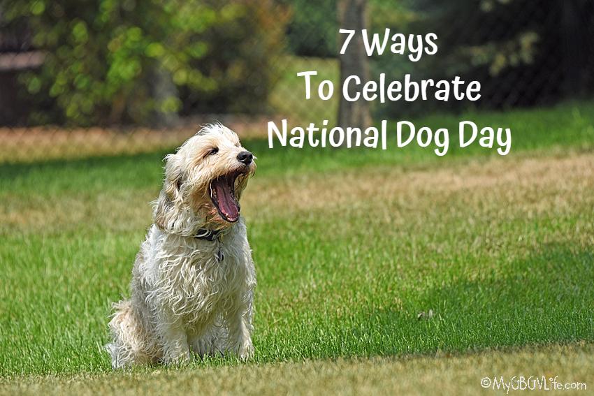 My GBGV Life 7 Ways To Celebrate National Dog Day 2021