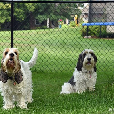 We Are Happy About Fence Repair