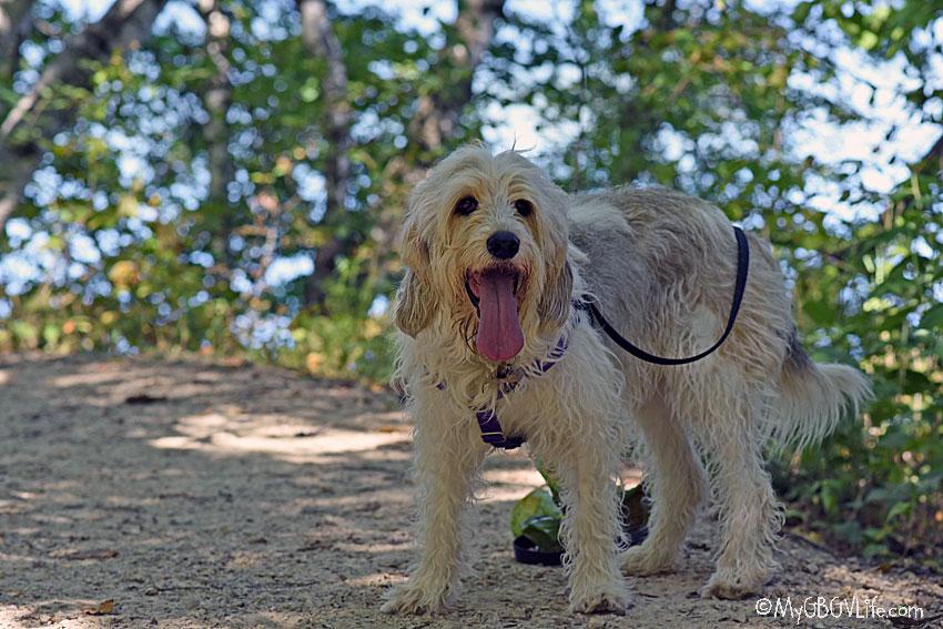 My GBGV Life Bailie on the trail