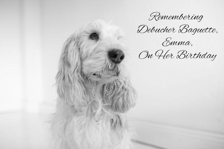 My GBGV Life Remembering Debucher Baguette, Emma, On Her Birthday
