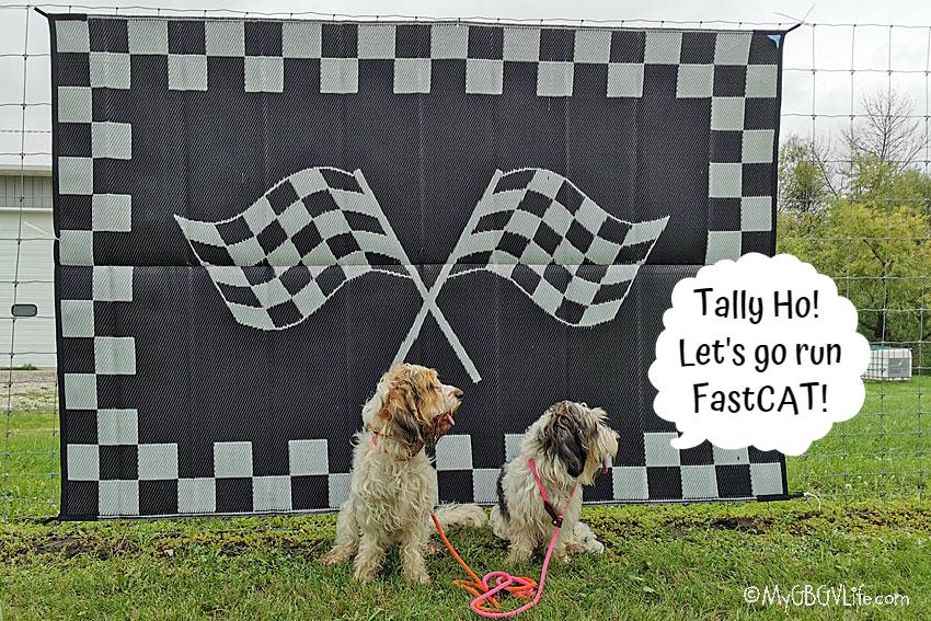My GBGV Life Tally Ho, Let's Go Run Some FastCAT!