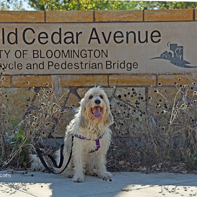 Exploring The Old Cedar Avenue Bridge