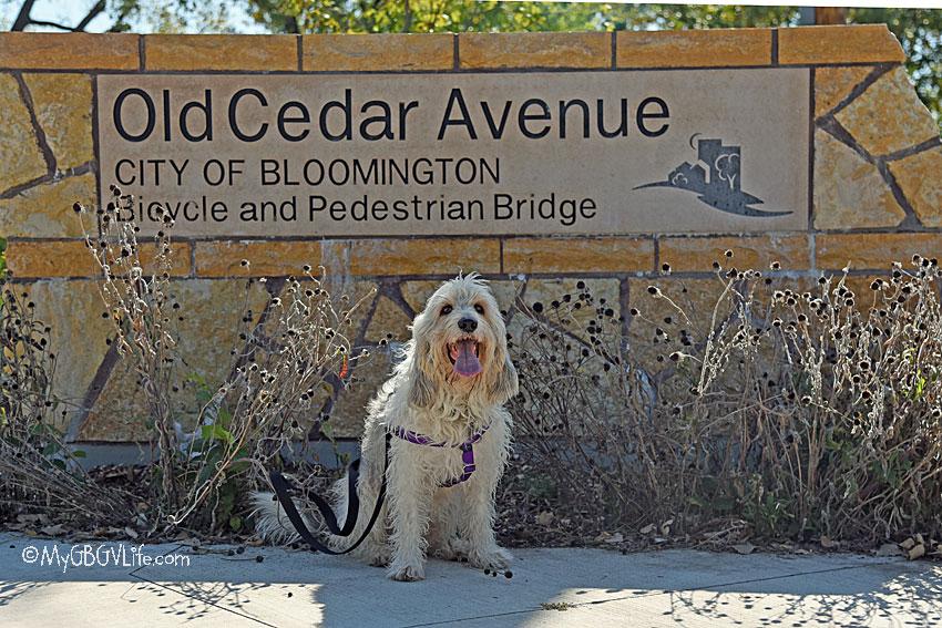 My GBGV Life Exploring The Old Cedar Avenue Bridge