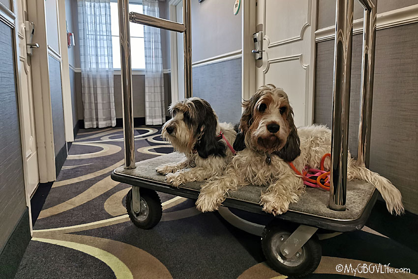 My GBGV Life luggage cart