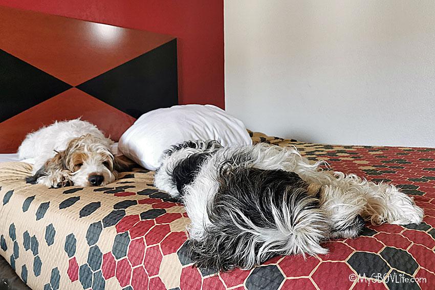 My GBGV Life dog tired dogs