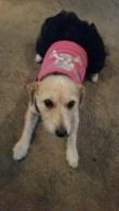 My furbaby Roxy!