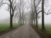 The tree-lined path to the monastery, made eerie by heavy fog