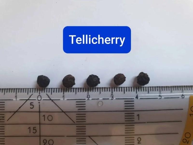 Tellichery Pepper