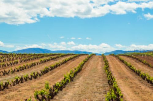 La Rioja on the Camino Frances