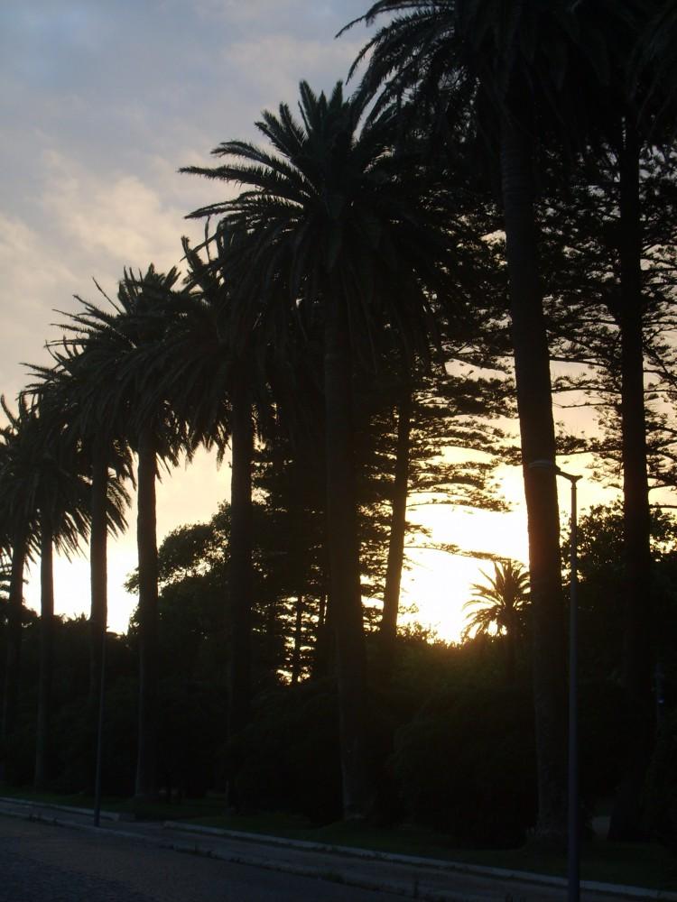Palmiers à Foz (2)