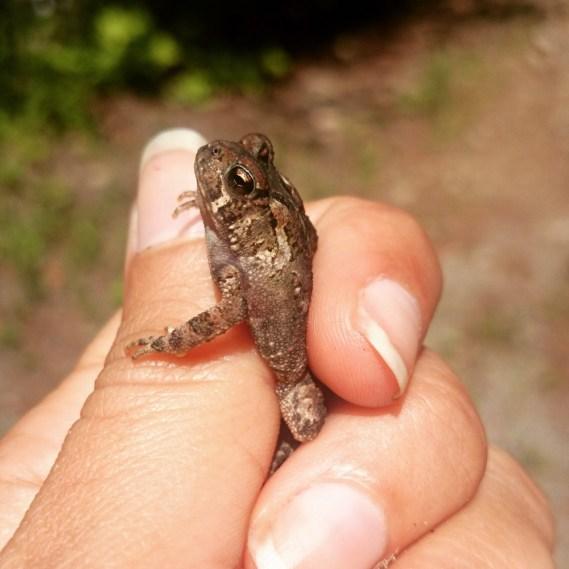 Froggy, la rescapée des crocs de Toupie
