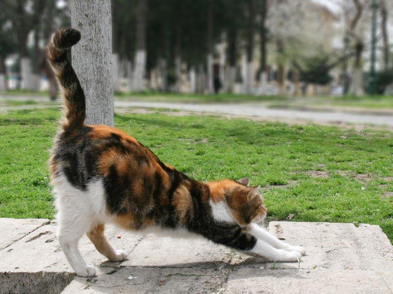 Faszienübungen ohne Rolle - auch Katzen tun es täglich