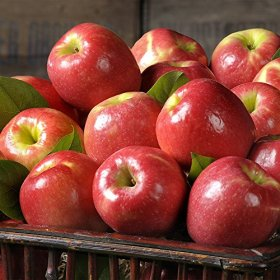 Pink Lady Apples – 7 lbs – The Fruit Company