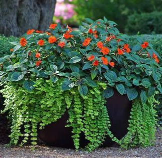 Planters & Flower Containers