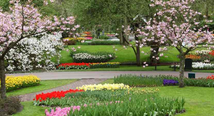 useful-lawn-care-tips-in-spring
