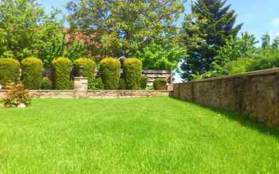 useful-tips-for-summer-lawn-care