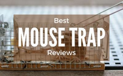 Best-Mouse-Trap-Reviews-1